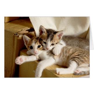 私の相棒の挨拶があることへの子ネコの双生児の感謝 カード