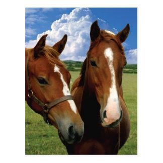 私の馬の郵便はがき ポストカード