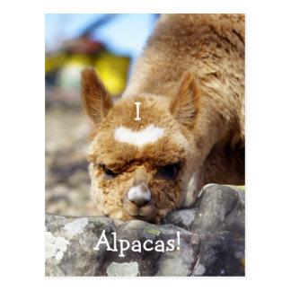 私はアルパカの郵便はがきを愛します ポストカード