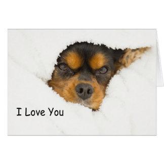 私はチャールズかいま見ている王スパニエル犬愛します カード