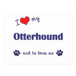 私は愛します私のカワウソ猟犬(オス犬)を ポストカード