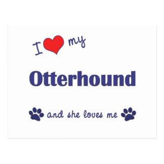 私は愛します私のカワウソ猟犬(メス犬)を ポストカード