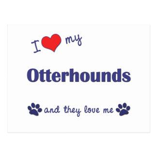 私は愛します私のカワウソ猟犬(多数犬)を ポストカード
