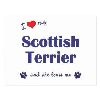 私は愛します私のスコットランドテリア(メス犬)を ポストカード