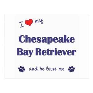 私は愛します私のチェサピーク・ベイ・レトリーバー(オス犬)を ポストカード