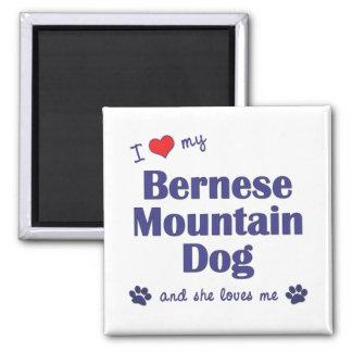 私は愛します私のバーニーズ・マウンテン・ドッグ(メス犬)を マグネット