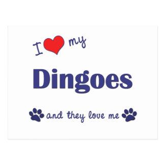 私は愛します私のDingoes (多数犬)を ポストカード