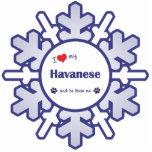 私は愛します私のHavanese (オス犬)を 写真の切り取り
