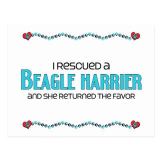 私は救助しましたビーグル犬のハリアー(メス犬)を ポストカード