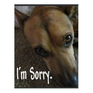 私は残念で悲しい犬です ポストカード