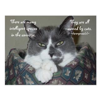 私は猫…です ポストカード