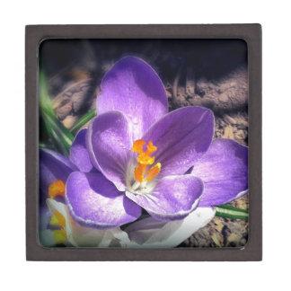 私は紫色の物を愛します。 #crocusの#spring #flowers ギフトボックス