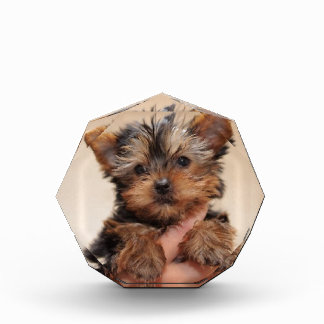 私を子犬抱き締めて下さい 表彰盾