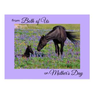 私達の両方からの母の日ロバ及び子馬の写真 ポストカード