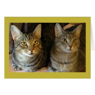 私達の両方からの虎猫猫のハッピーバースデーカード カード