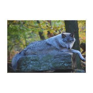 秋に休んでいる灰色の樹木限界線のオオカミ キャンバスプリント