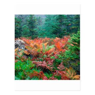 秋のアカディアメインの森林カラフルなシダ ポストカード