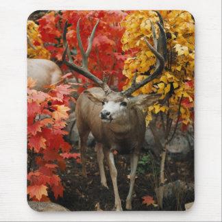 秋のオジロ鹿 マウスパッド