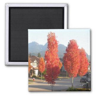 秋のオレンジの木 マグネット