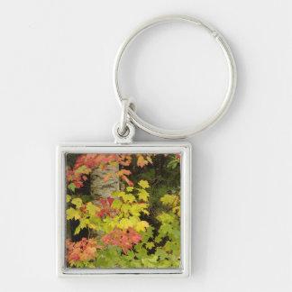 秋のカエデの木および白い樺の木 キーホルダー