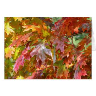 秋のカエデの木のnotecard 2013 5 カード