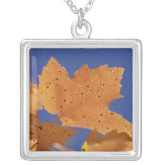 秋のカエデの葉および白い青空 シルバープレートネックレス
