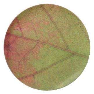 秋のカシの葉のプレート プレート