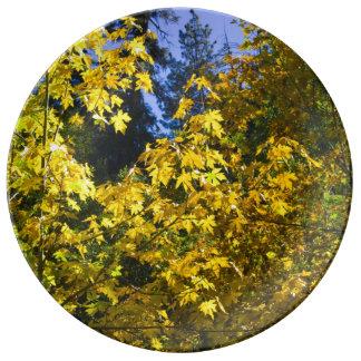 秋のカシ 磁器プレート