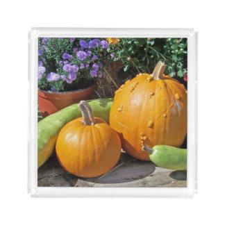 秋のカボチャおよび花 アクリルトレー