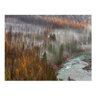 秋のカラマツ木の霧ロール ポストカード