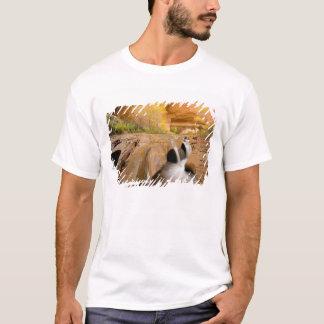 秋のコットンウッド、コヨーテの渓谷、谷間 Tシャツ