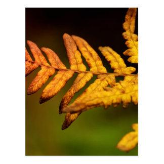 秋のシダの芸術 ポストカード