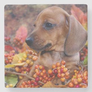 秋のダックスフントの子犬 ストーンコースター