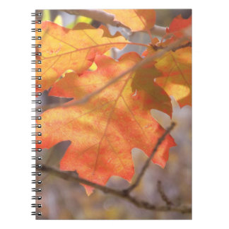 秋のノートの色 ノートブック