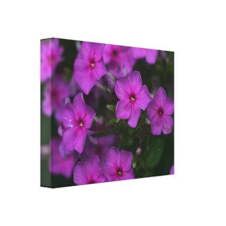 秋のフロックス属のピンクの野生の花の花のキャンバスのプリント キャンバスプリント