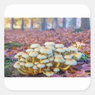 秋のブナの森林のきのこのグループ スクエアシール