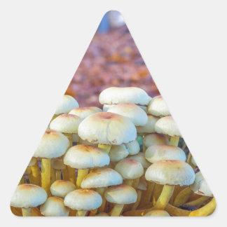 秋のブナの森林のきのこのグループ 三角形シール