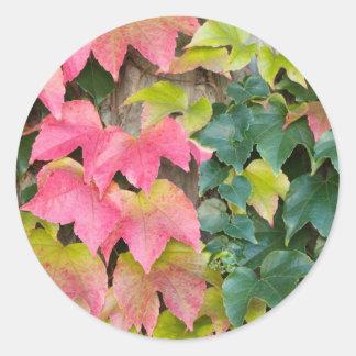 秋のボストンキヅタ ラウンドシール