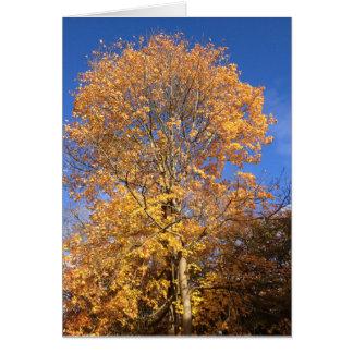 秋の優美 カード