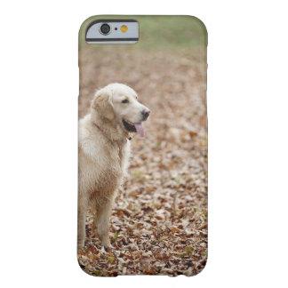 秋の公園のゴールデン・リトリーバー BARELY THERE iPhone 6 ケース