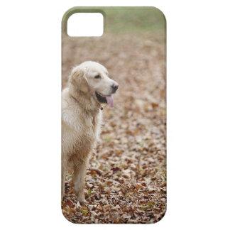 秋の公園のゴールデン・リトリーバー iPhone 5 CASE