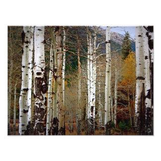 秋の写真のロッキー山国立公園の《植物》アスペン フォトプリント