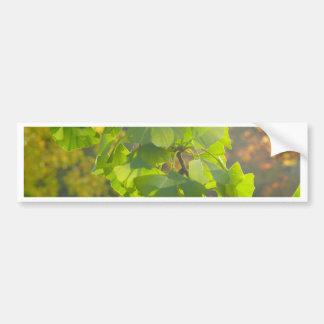秋の太陽のGingkoの葉 バンパーステッカー