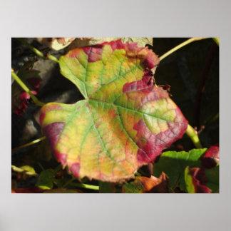 秋の太陽のvineleaf ポスター