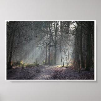 秋の太陽は森林を通して縞を放射します ポスター