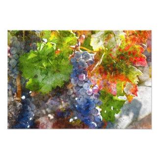 秋の季節のつる植物のブドウ フォトプリント