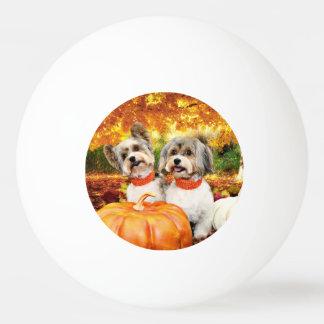 秋の感謝祭-最高及びレオ-ヨークシャーテリア 卓球ボール