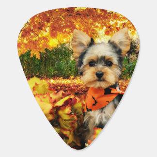 秋の感謝祭-最高-ヨークシャーテリア ギターピック