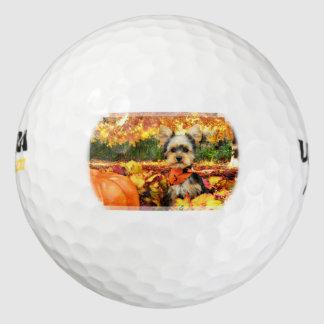 秋の感謝祭-最高-ヨークシャーテリア ゴルフボール
