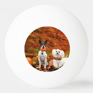 秋の感謝祭- Montyのフォックステリア犬及びMillyのモルト 卓球ボール